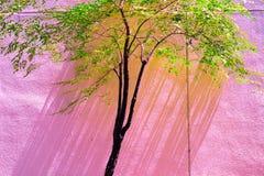 Винтажный зеленый пастельный цвет изолята дерева к творческой картине Стоковая Фотография RF