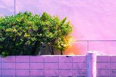 Винтажный зеленый пастельный цвет изолята дерева к творческой картине Стоковое фото RF