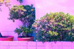 Винтажный зеленый пастельный цвет изолята дерева к творческой картине Стоковые Изображения