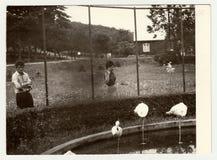 Винтажный ЗООПАРК посещения людей выставок фото Стоковая Фотография RF