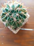 Винтажный кактус стиля в баке Стоковое Фото