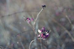 Винтажный куст зимы Стоковое Изображение
