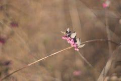 Винтажный куст осени Стоковое фото RF