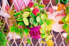 Винтажный пастельный цвет корзины цветка к творческим картине и текстуре стоковая фотография rf