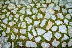 Винтажный путь камня сада Стоковое Изображение RF