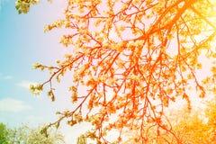 Винтажный сад на заходе солнца Стоковое фото RF