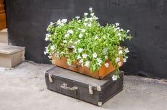 Винтажный старый ретро чемодан 2 положенный на улицу и стоимость ваза белых цветков Стоковые Изображения RF