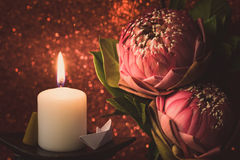 Винтажный стиль изображения на розовой складчатости лилии воды или цветка лотоса Стоковое Фото