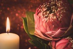 Винтажный стиль изображения на розовой складчатости лилии воды или цветка лотоса Стоковое Изображение RF