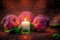 Винтажный стиль изображения на розовой складчатости лилии воды или цветка лотоса Стоковые Фотографии RF