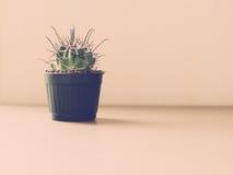 Винтажный тон кактуса Стоковое Фото