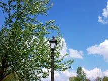 Винтажный уличный свет между зацветая ветвями Стоковое Изображение