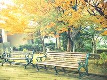 Винтажный фильтр деревянной скамьи в парке в осени Стоковое Изображение