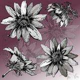 Винтажный флористический комплект Адониса и красочной предпосылки иллюстрация штока