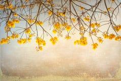 Винтажный цветок дерева в лете Стоковые Изображения RF