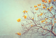 Винтажный цветок дерева в лете Стоковое Изображение RF