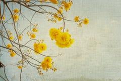 Винтажный цветок дерева в лете Стоковое Фото