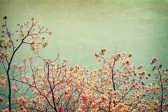 Винтажный цветок дерева в лете Стоковые Фото