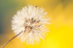 Винтажный цвет и мягкий фокус конца вверх по траве цветков для предпосылки Стоковые Фото