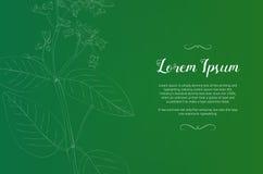 Винтажный шаблон дизайна с зеленым растением Стоковые Изображения