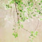 Винтажный Treetop картины Стоковое Изображение RF