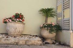 2 винтажных каменных больших белых вазы для двора с цветками около белой стены Стоковые Изображения