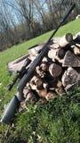Винтовка в древесинах Стоковые Изображения RF