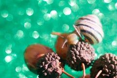 Винтовой линии pomatia улитка также римская, бургундская улитка, воздушно улитка земли, земная pulmonate наяда gastropod внутри стоковое фото rf