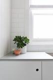 Виньетка горшечного растения и орнаментов на benchtop кухни Стоковое Изображение RF