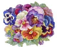 Виола Tricolor бесплатная иллюстрация