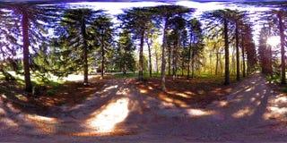 Виртуальная реальность UHD 4K 360 VR рекреационной зоны парка города Деревья и зеленая трава на осени или летнем дне акции видеоматериалы