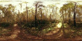Виртуальная реальность UHD 4K 360 VR рекреационной зоны парка города Деревья и зеленая трава на осени или летнем дне сток-видео