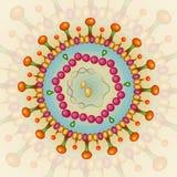Вирус Гепатита B Справочная информация 10 eps Стоковые Фото