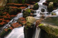 Вирджиния мочит водопад Стоковые Фотографии RF