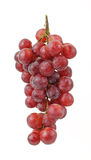 висеть виноградины пука Стоковые Изображения RF