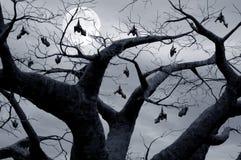 висеть летучих мышей Стоковые Изображения RF
