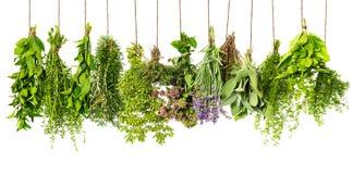 Висеть трав изолированный на белизне. пищевые ингредиенты стоковые фото