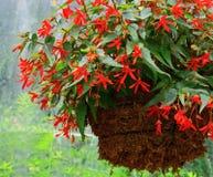висеть цветка корзины Стоковые Фотографии RF