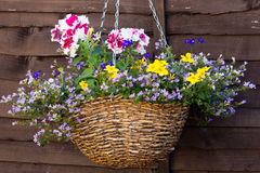 висеть цветка корзины Стоковые Изображения RF