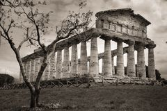 висок Афины Paestum salerno Кампания Италия стоковые изображения rf