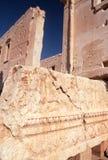 Висок бела на пальмире в Сирии Стоковые Фотографии RF