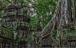 Висок в камбоджийских джунглях Стоковые Изображения