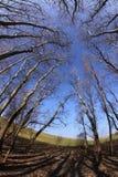 Висок деревьев стоковое изображение