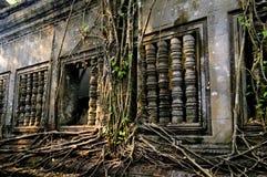 висок джунглей Стоковые Изображения RF