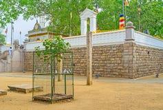 Висок дерева Bodhi Стоковые Фото