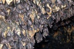 висок Индонесии летучей мыши bali Стоковое Изображение