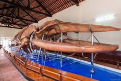 Висок кита †Van Thuy Tu «священный, Phan Thiet, Вьетнам Стоковое Фото