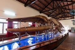 Висок кита †Van Thuy Tu «священный, Phan Thiet, Вьетнам Стоковая Фотография RF
