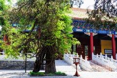 Висок Конфуция, Пекин, Китай стоковые изображения