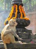 Висок Непал обезьяны Стоковая Фотография